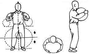 postura da arvore